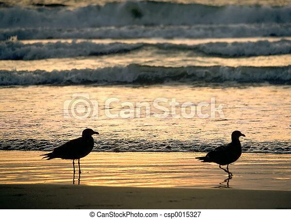 Two Gull Sunset - csp0015327