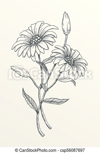 Two Hand Drawn Daisies Hand Drawn Line Art Flower Vector