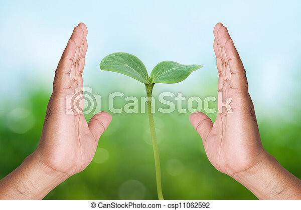 Two hand holding young plant on nature background - csp11062592