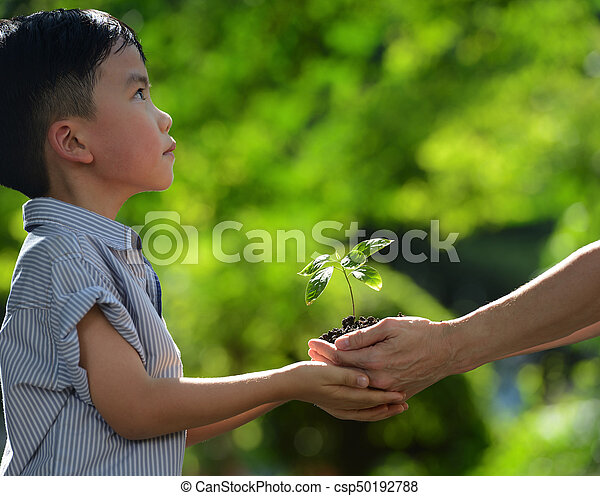 Two hands holding together a green young plant - csp50192788