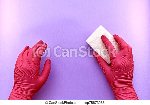 Two hands in rubber gloves, one washing sponge, abrasive side up, with a free purple background. - csp75673266