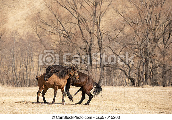 Two Horse Mating In The Field