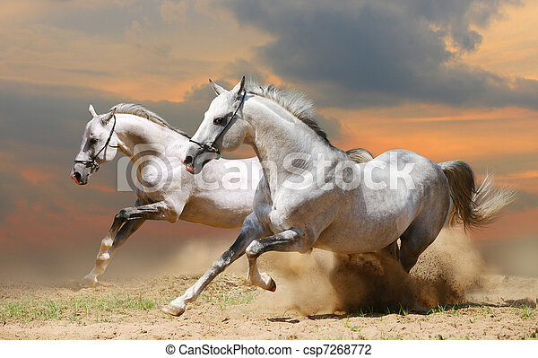 two horses in sunset - csp7268772
