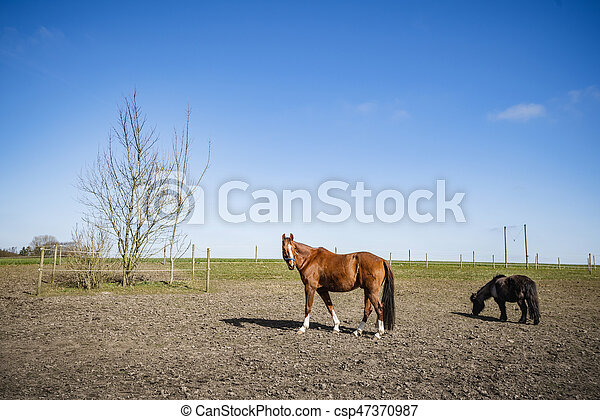 Two horses on a rural field - csp47370987