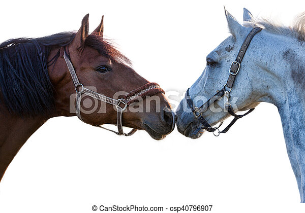 two horses on a white background - csp40796907