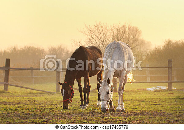 two horses on ranch - csp17435779