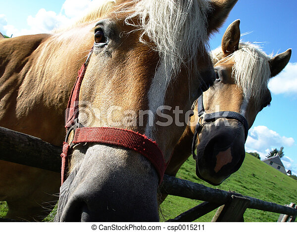 two horses - csp0015211