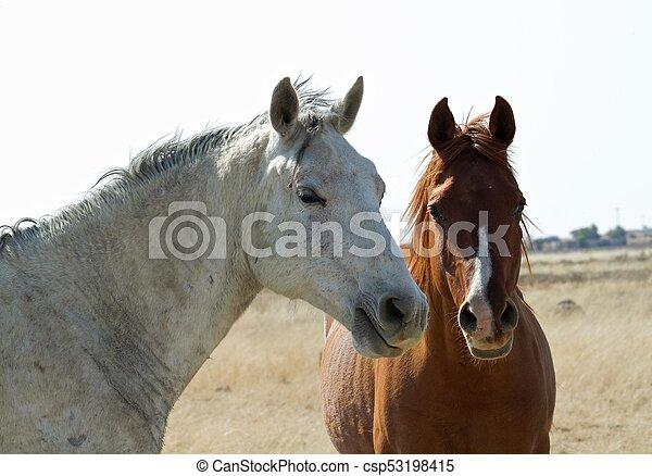 Two horses - csp53198415