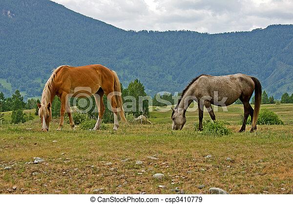 two horses - csp3410779