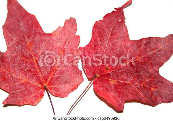 Two leaves - csp0496938