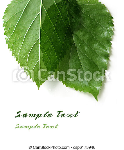 Two Leaves - csp6175946