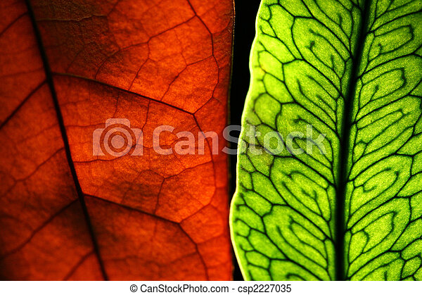 Two leaves - csp2227035