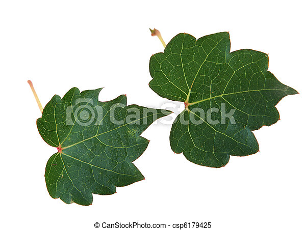 Two Leaves - csp6179425