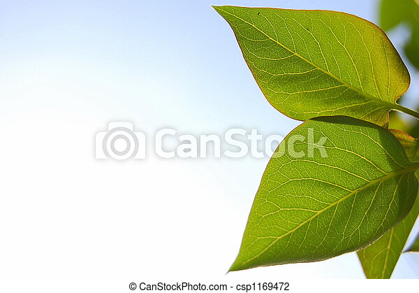 Two Leaves - csp1169472