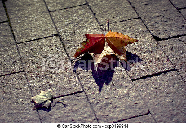 Two leaves - csp3199944
