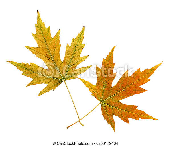 Two Leaves - csp6179464