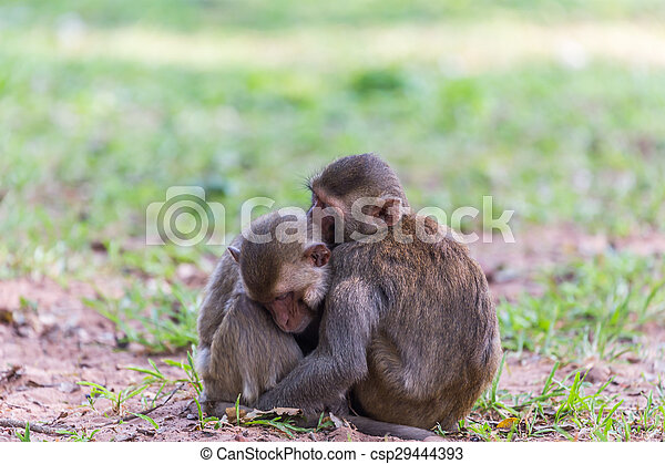 Two monkey sleeping - csp29444393