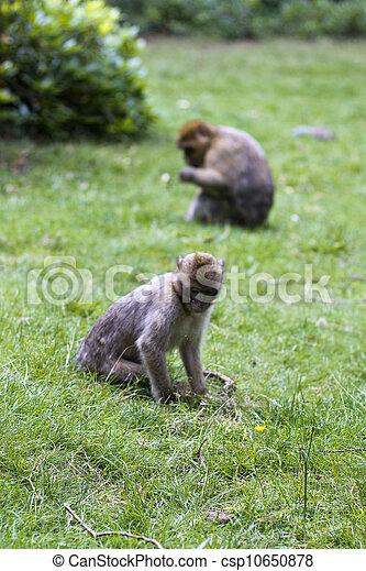 Two monkeys - csp10650878