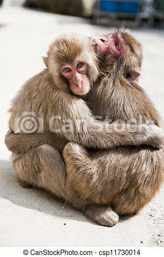 Two monkeys - csp11730014