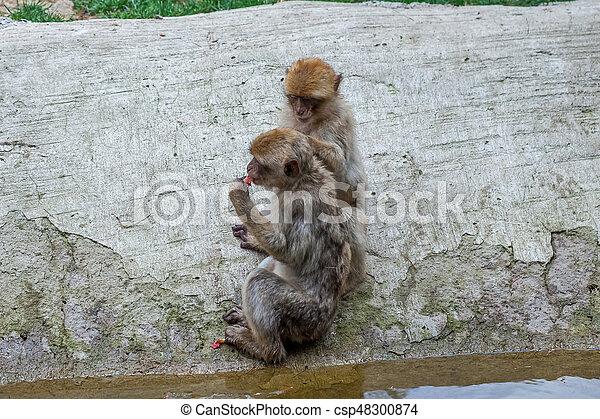 Two monkeys - csp48300874