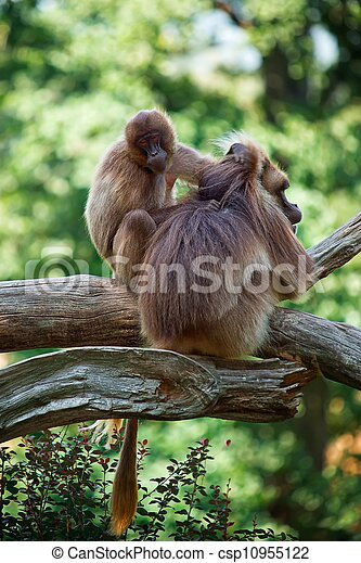 Two monkeys, - csp10955122
