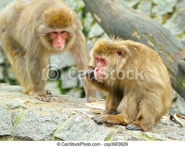 Two monkeys - csp3903629