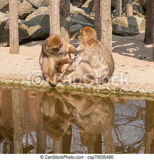 Two monkeys - csp70035490