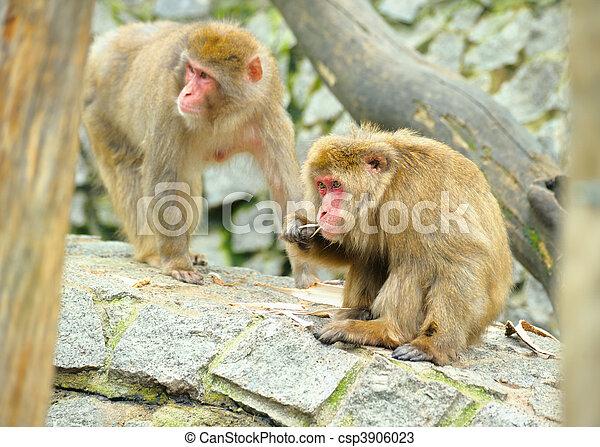Two monkeys - csp3906023