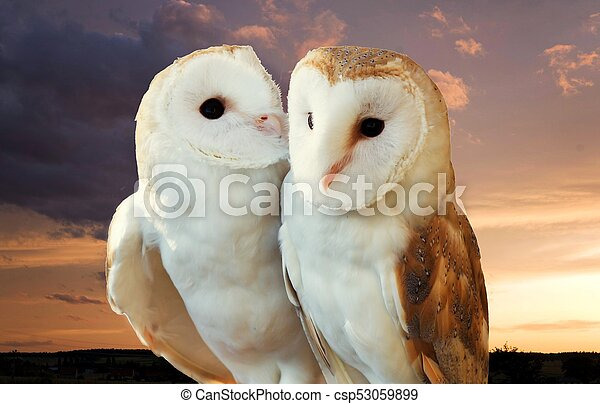 two owls friends - csp53059899