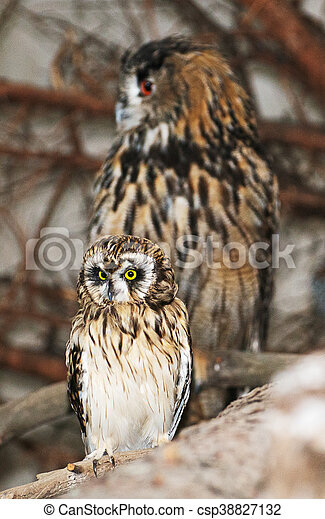 Two owls sitting on a branch. - csp38827132