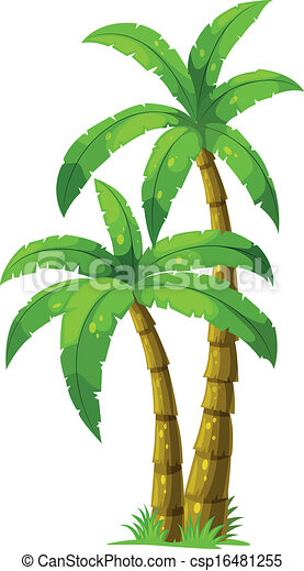 two palm trees illustration of the two palm trees on a white