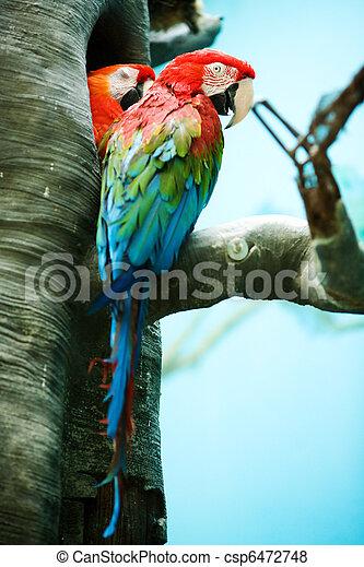 Two parrots - csp6472748