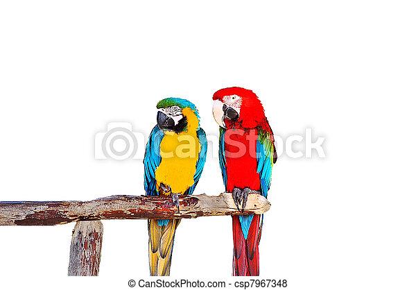 Two parrots - csp7967348