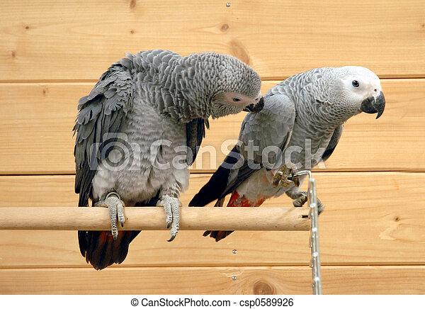 two parrots - csp0589926