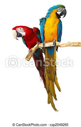 two parrots - csp2049265