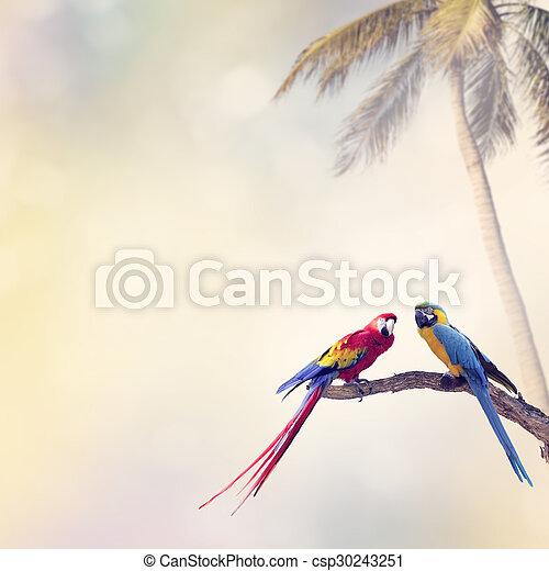 Two Parrots - csp30243251