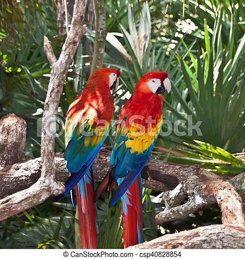 Two Parrots - csp40828854