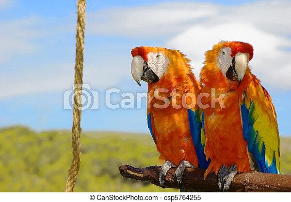 two parrots - csp5764255