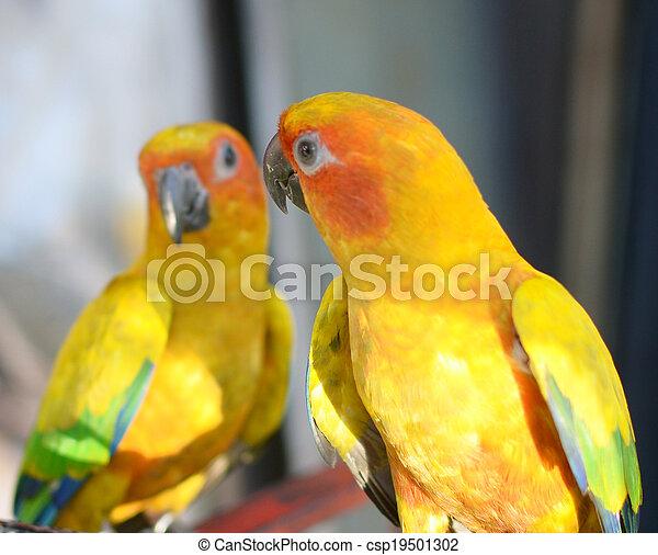 two parrots - csp19501302