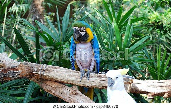 Two parrots - csp3486770