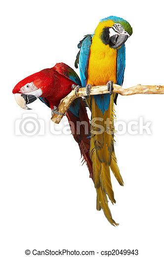 two parrots - csp2049943