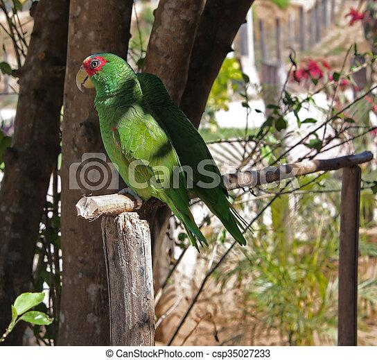 Two parrots. - csp35027233