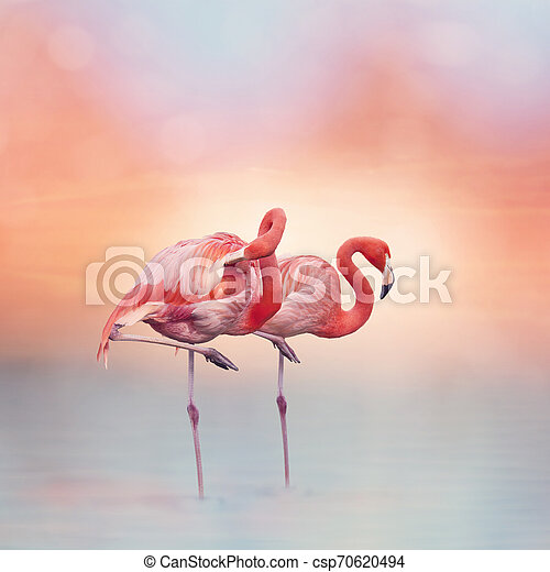 Two Pink flamingos at sunset - csp70620494