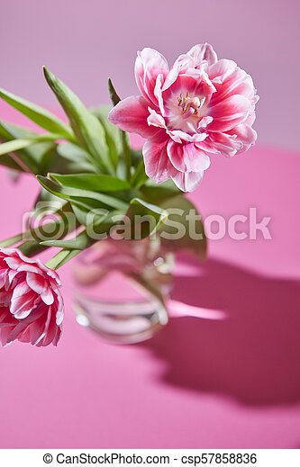 5f2f71963430d Two Pink Tulips In A Transparent Vase On A Pink Background. Spring  Composition