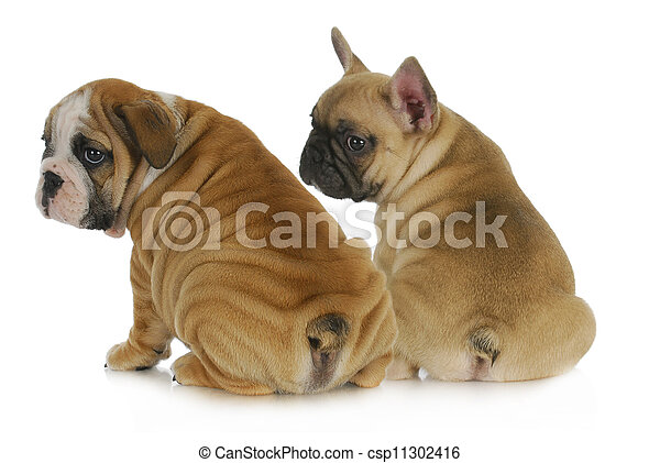 two puppies - csp11302416