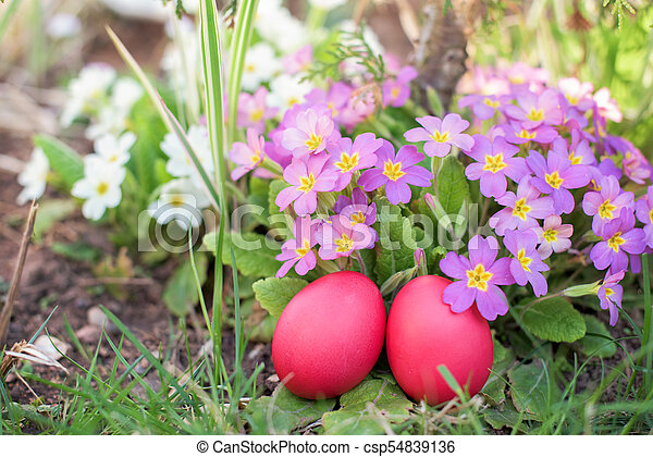 Two red Easter eggs in a garden - csp54839136