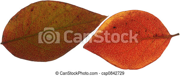 Two Red Leaves XXL - csp0842729