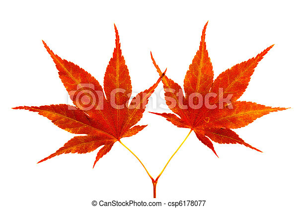 Two red maple leaves - csp6178077