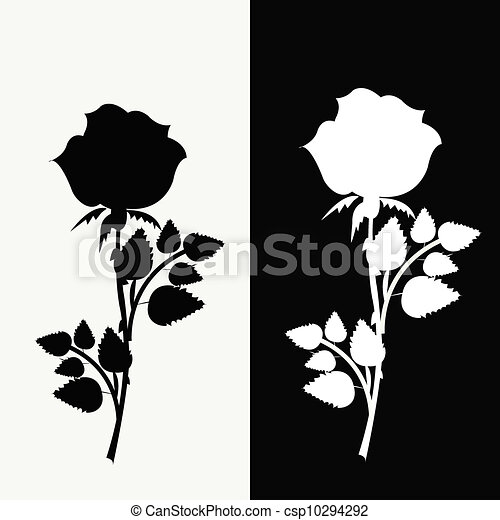 87b328b9c Two roses, black and white - csp10294292