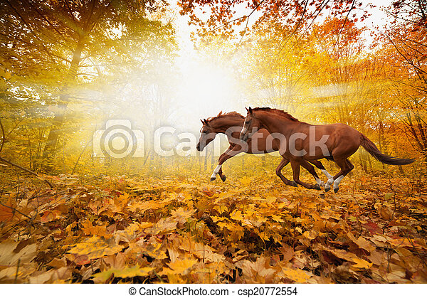 two running horses two horses running in autumn forest picture for